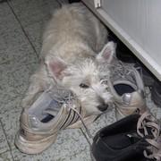 atos-s-cipelama-050409