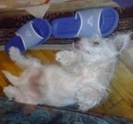 atos-spava